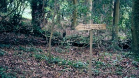 There is an 'Alice in Wonderland' trail, which we followed - widdershins.